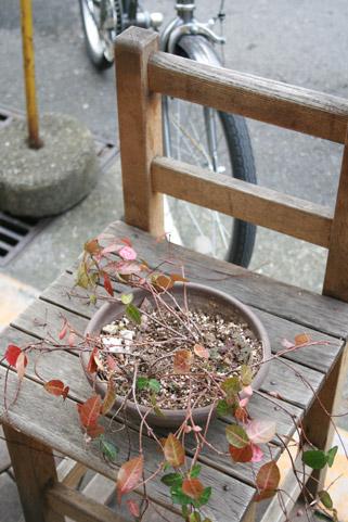 カフェの植木