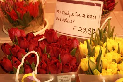 売店で売られているチューリップ2