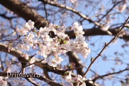 primavera01