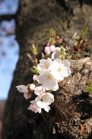 primavera04