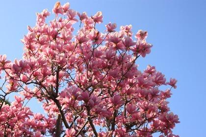 primavera07